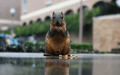 Squirrels of UT – where are they now?