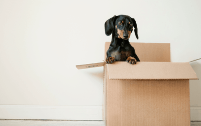 Moving and Storage in Austin